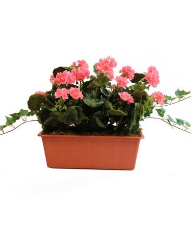 géraniums artificiels, rose (3 pièces) en boîte balcon de 40 cm, terracota. Protégé contre les UV !