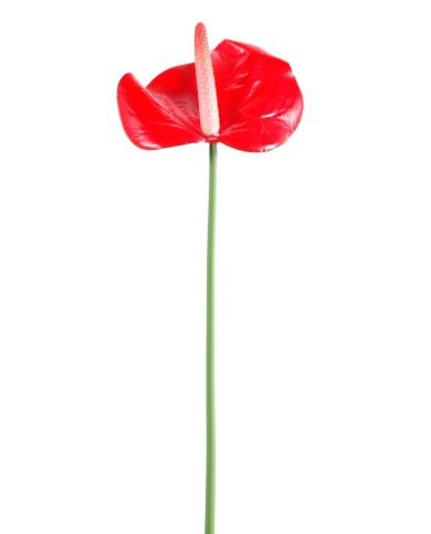 Künstliche Anthurium rot, ca. 60cm