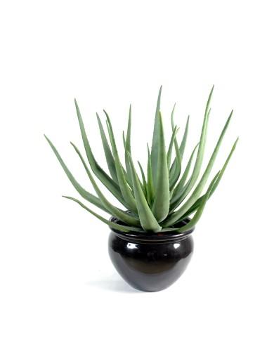 Künstliche Aloevera, ca. 70cm