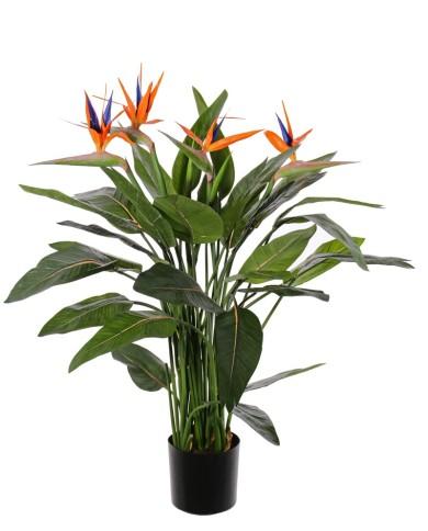 Strelitzia, Paradiesvogelblume, ca. 120cm