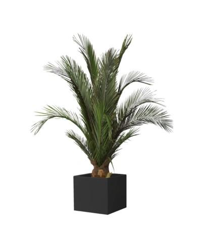 Konservierte Phönix-Palme, ca. 100cm