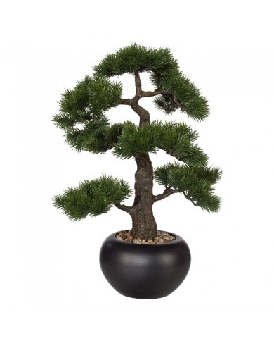"Bonsai ""Kiefer"" ,ca 48cm"